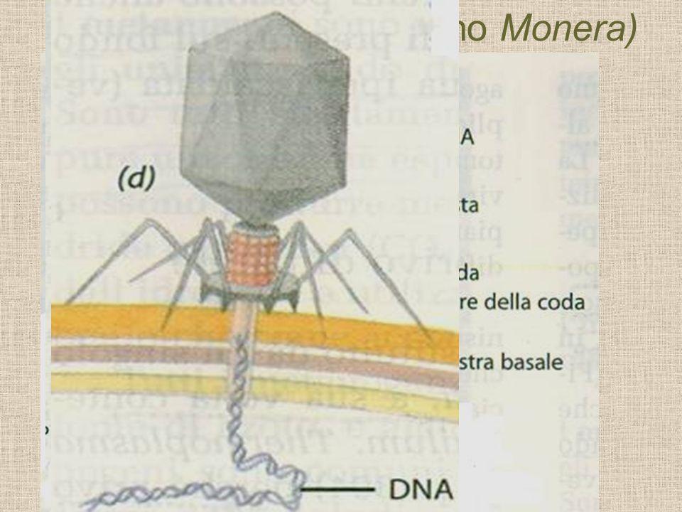 Una porzione di una particella di TMV (virus del mosaico del tabacco) determinata mediante cristallografia ai raggi X. Il singolo filamento di RNA, in