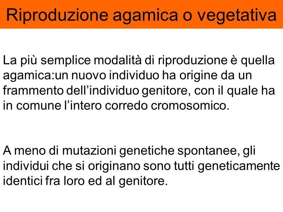 Una delle caratteristiche Degli esseri viventi è la capacità di riprodursi, i vegetali lo fanno con due diverse modalità Riproduzione agamica o Propag