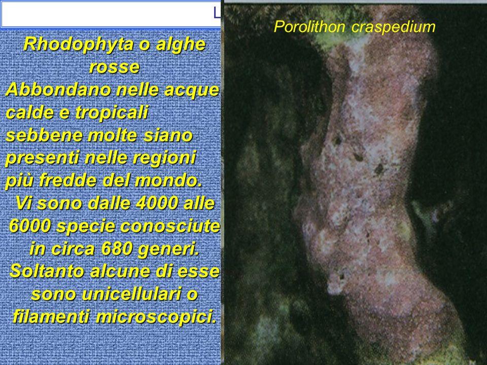 Le alghe Ricapitolando: Le alghe sono viventi eucarioti, fotosintetici, con cloroplasti provvisti di clorofilla associata a pigmenti diversi. Vivono i