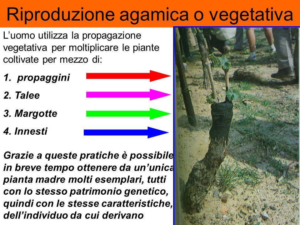 Gli organismi vegetali più complessi, organizzati in tessuti ed organi, anche porzioni costituite da tessuti altamente differenziati (ad es. un ramett