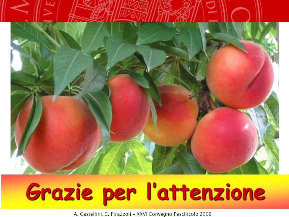 Grazie per lattenzione A. Castellini, C. Pirazzoli - XXVI Convegno Peschicolo 2009