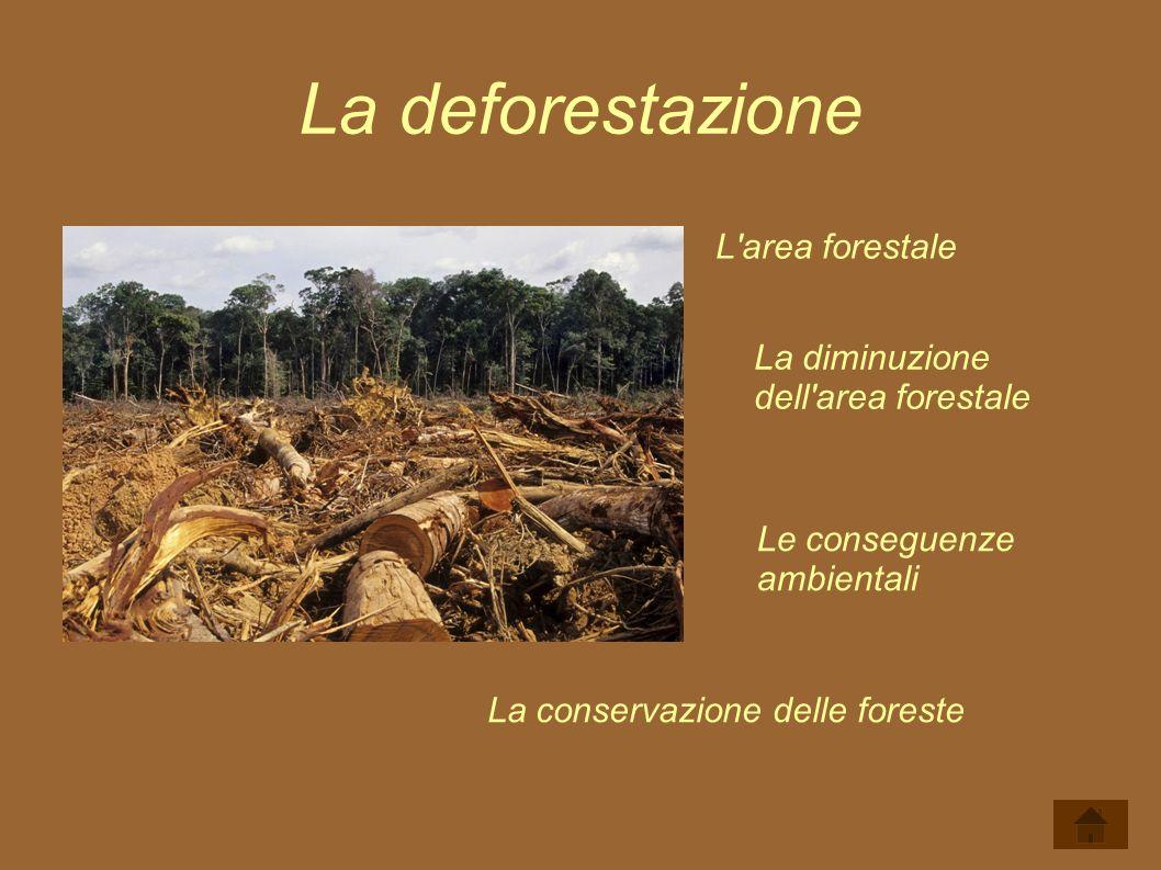 La deforestazione L'area forestale La diminuzione dell'area forestale Le conseguenze ambientali La conservazione delle foreste
