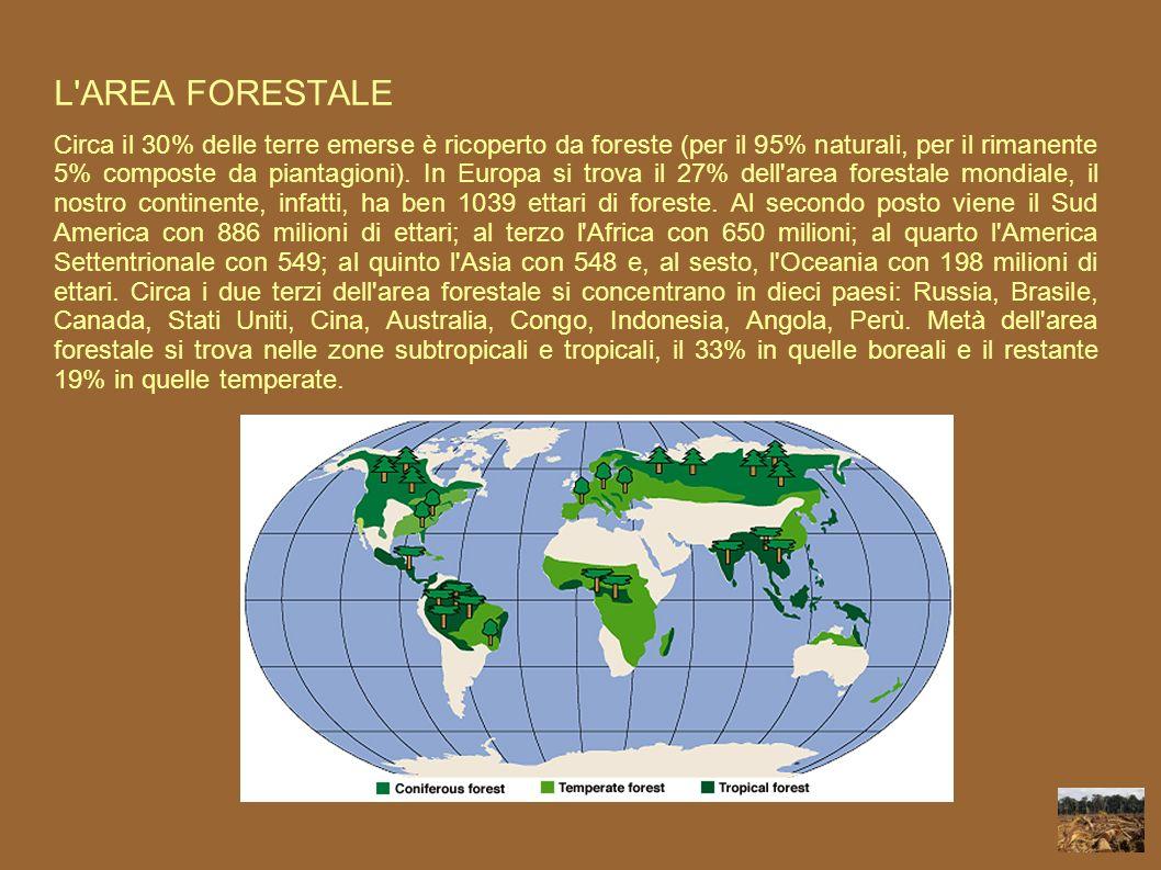 L'AREA FORESTALE Circa il 30% delle terre emerse è ricoperto da foreste (per il 95% naturali, per il rimanente 5% composte da piantagioni). In Europa