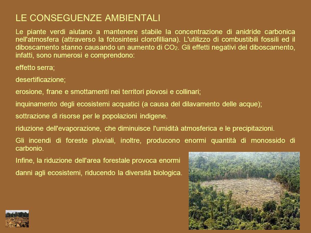 LE CONSEGUENZE AMBIENTALI Le piante verdi aiutano a mantenere stabile la concentrazione di anidride carbonica nell'atmosfera (attraverso la fotosintes