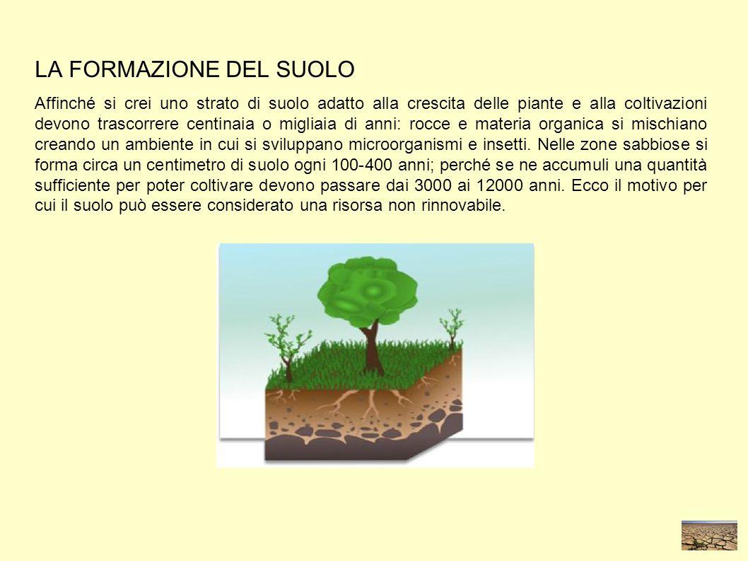 LA FORMAZIONE DEL SUOLO Affinché si crei uno strato di suolo adatto alla crescita delle piante e alla coltivazioni devono trascorrere centinaia o migliaia di anni: rocce e materia organica si mischiano creando un ambiente in cui si sviluppano microorganismi e insetti.