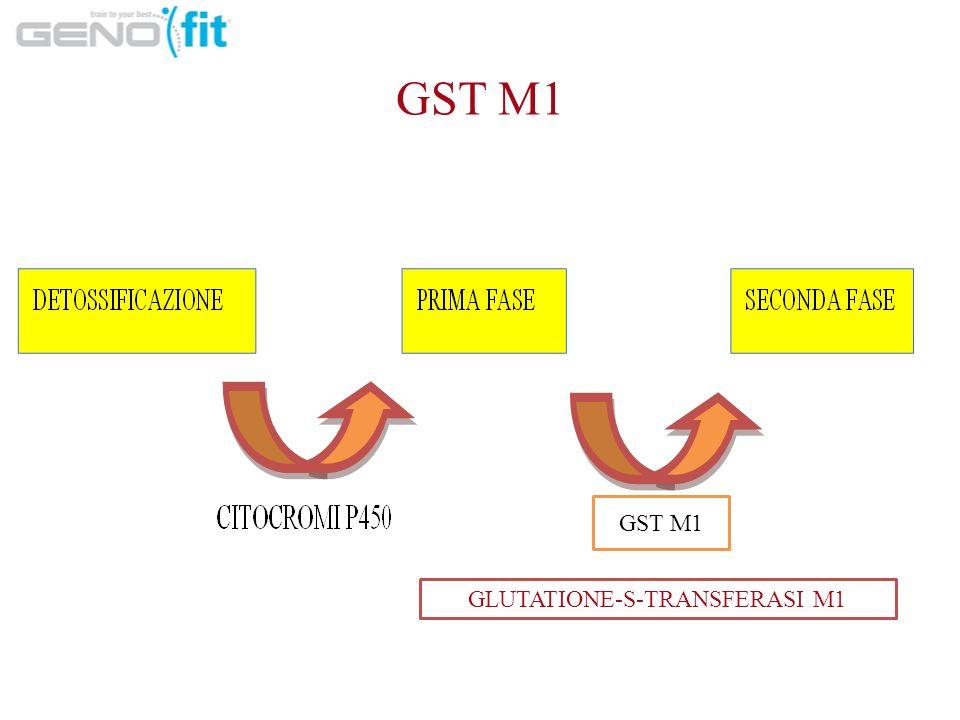 GST M1 GLUTATIONE-S-TRANSFERASI M1