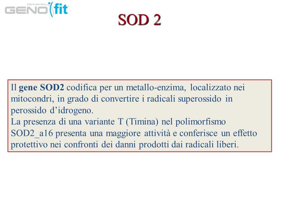 SOD 2 Il gene SOD2 codifica per un metallo-enzima, localizzato nei mitocondri, in grado di convertire i radicali superossido in perossido didrogeno.