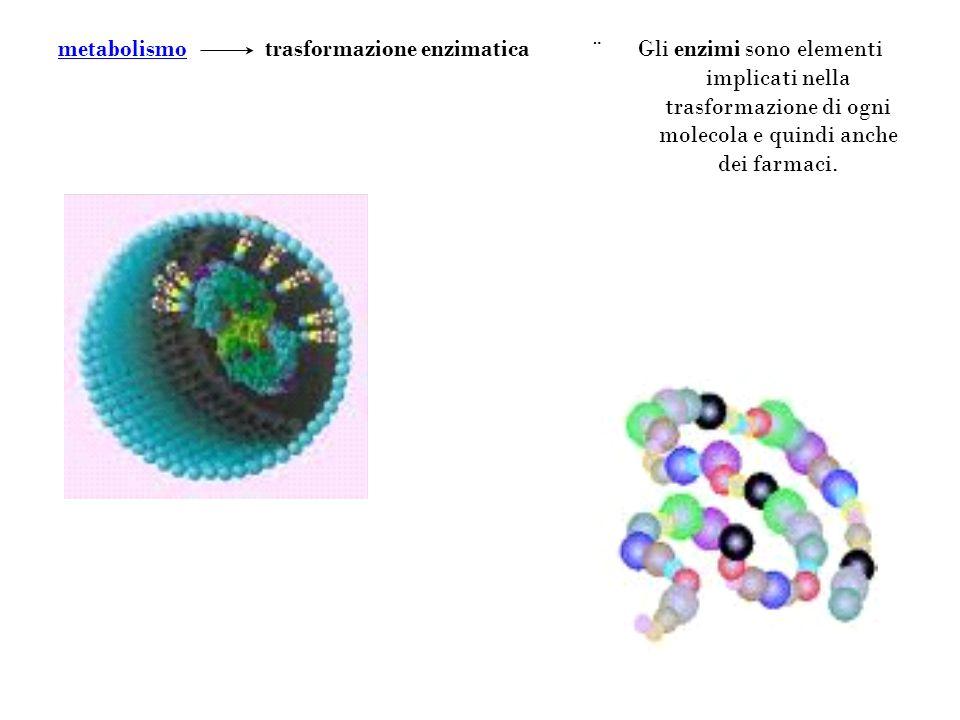 Gli enzimi sono elementi implicati nella trasformazione di ogni molecola e quindi anche dei farmaci. ¨ trasformazione enzimaticametabolismo