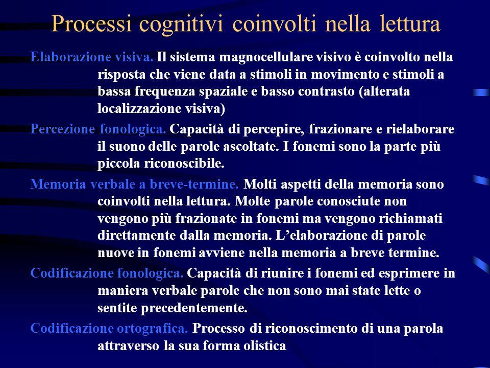 Processi cognitivi coinvolti nella lettura Elaborazione visiva. Il sistema magnocellulare visivo è coinvolto nella risposta che viene data a stimoli i