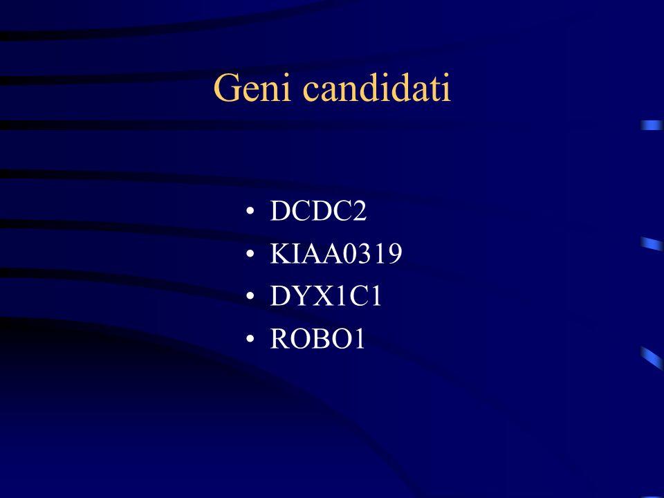 Geni candidati DCDC2 KIAA0319 DYX1C1 ROBO1