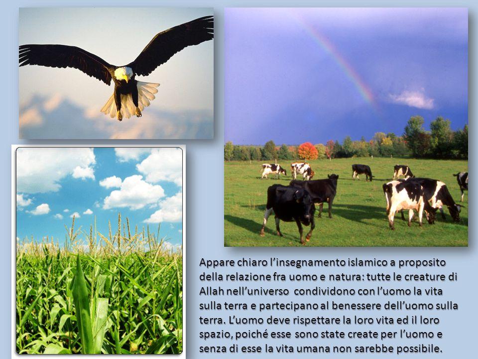 Appare chiaro linsegnamento islamico a proposito della relazione fra uomo e natura: tutte le creature di Allah nelluniverso condividono con luomo la vita sulla terra e partecipano al benessere delluomo sulla terra.