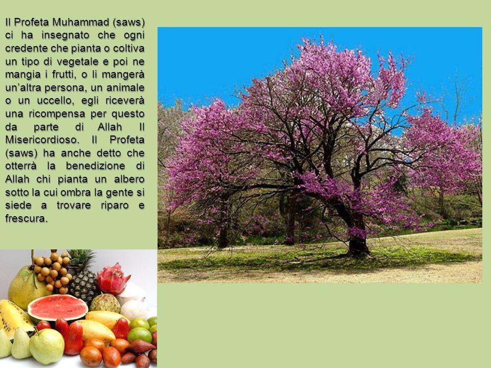 Il Profeta Muhammad (saws) ci ha insegnato che ogni credente che pianta o coltiva un tipo di vegetale e poi ne mangia i frutti, o li mangerà unaltra persona, un animale o un uccello, egli riceverà una ricompensa per questo da parte di Allah Il Misericordioso.