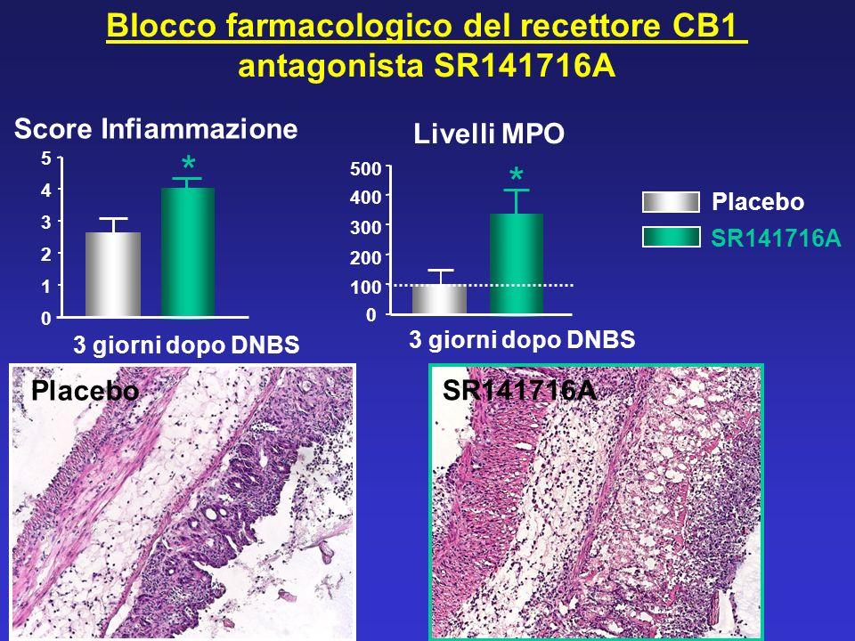 * * Blocco farmacologico del recettore CB1 antagonista SR141716A Placebo SR141716A 3 giorni dopo DNBS Placebo SR141716A Score Infiammazione Livelli MP