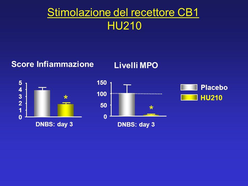Stimolazione del recettore CB1 HU210 * * DNBS: day 3 0 1 2 3 4 5 150 0 50 100 Score Infiammazione Livelli MPO Placebo HU210 DNBS: day 3