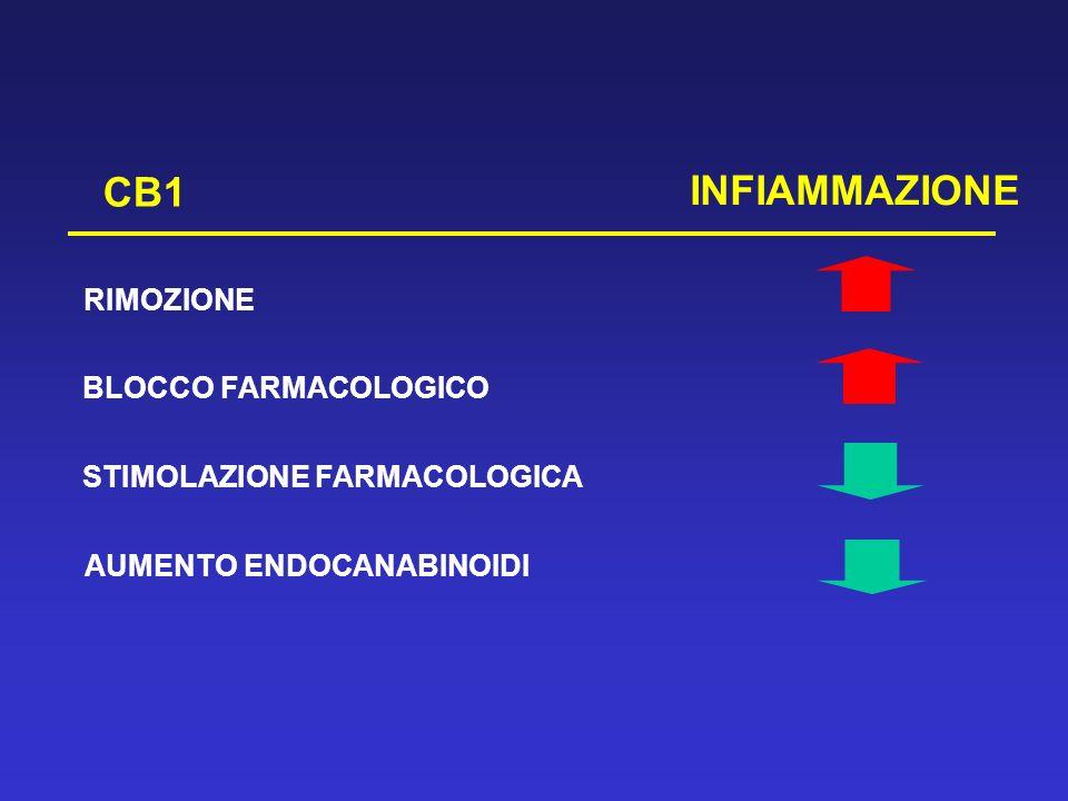 CB1 INFIAMMAZIONE RIMOZIONE BLOCCO FARMACOLOGICO STIMOLAZIONE FARMACOLOGICA AUMENTO ENDOCANABINOIDI