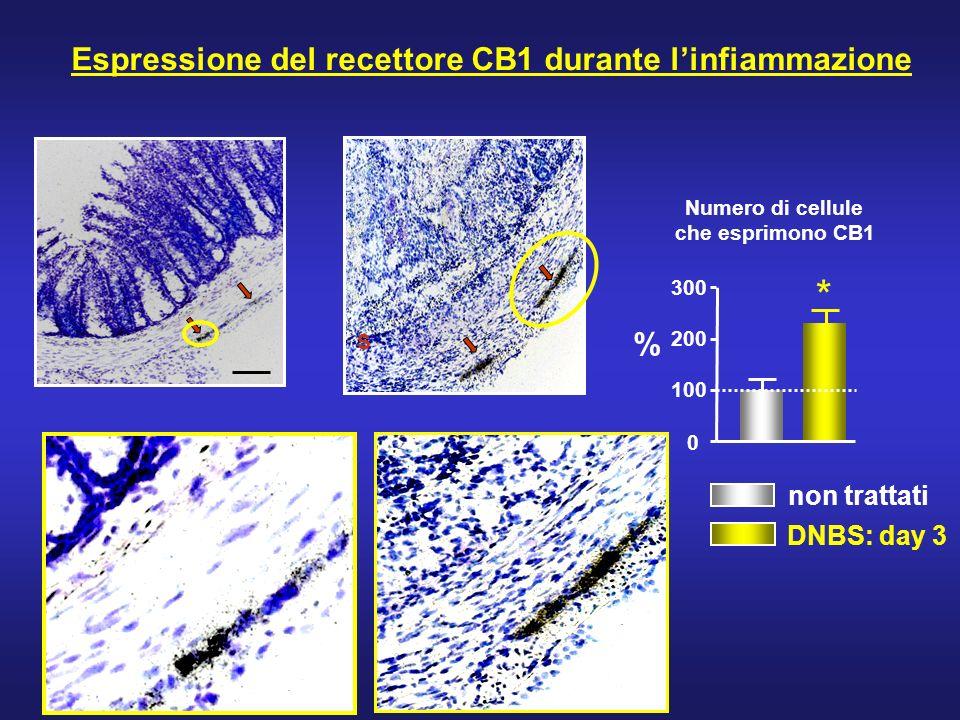 S Espressione del recettore CB1 durante linfiammazione Numero di cellule che esprimono CB1 0 100 200 300 * % non trattati DNBS: day 3