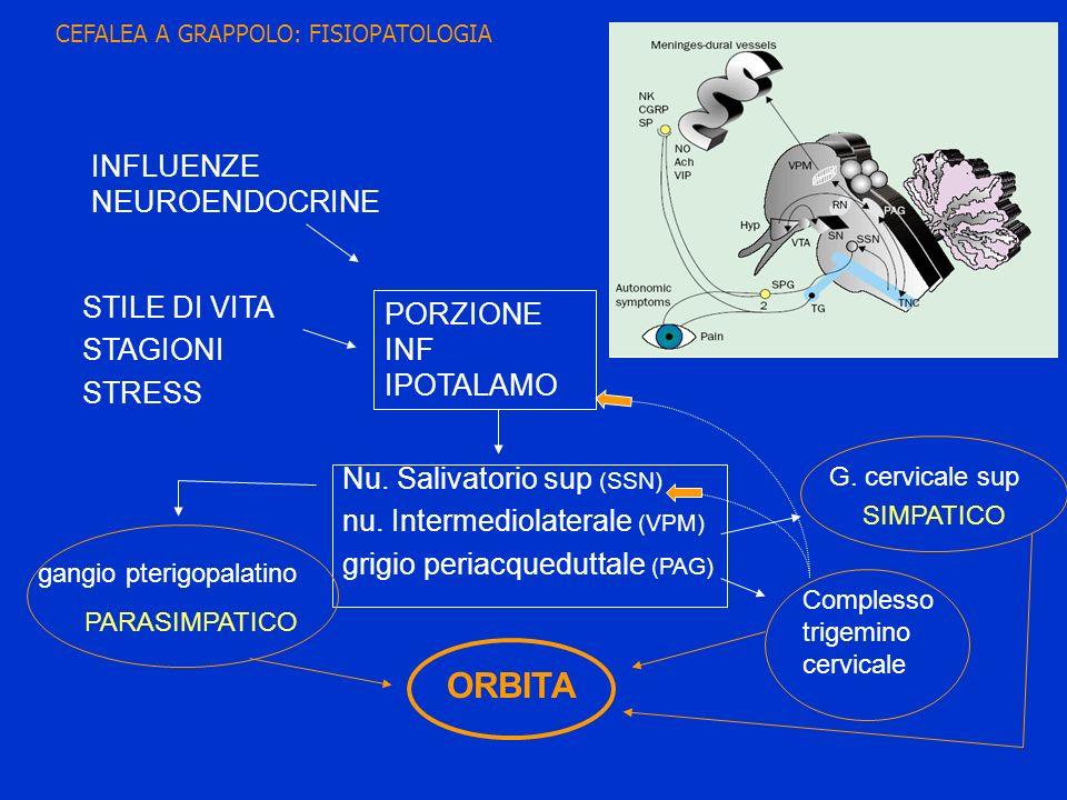STILE DI VITA STAGIONI STRESS INFLUENZE NEUROENDOCRINE PORZIONE INF IPOTALAMO Nu. Salivatorio sup (SSN) nu. Intermediolaterale (VPM) grigio periacqued