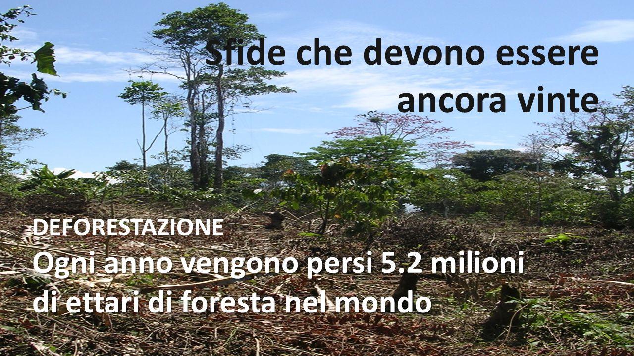 Sfide che devono essere ancora vinte DEFORESTAZIONE Ogni anno vengono persi 5.2 milioni di ettari di foresta nel mondo