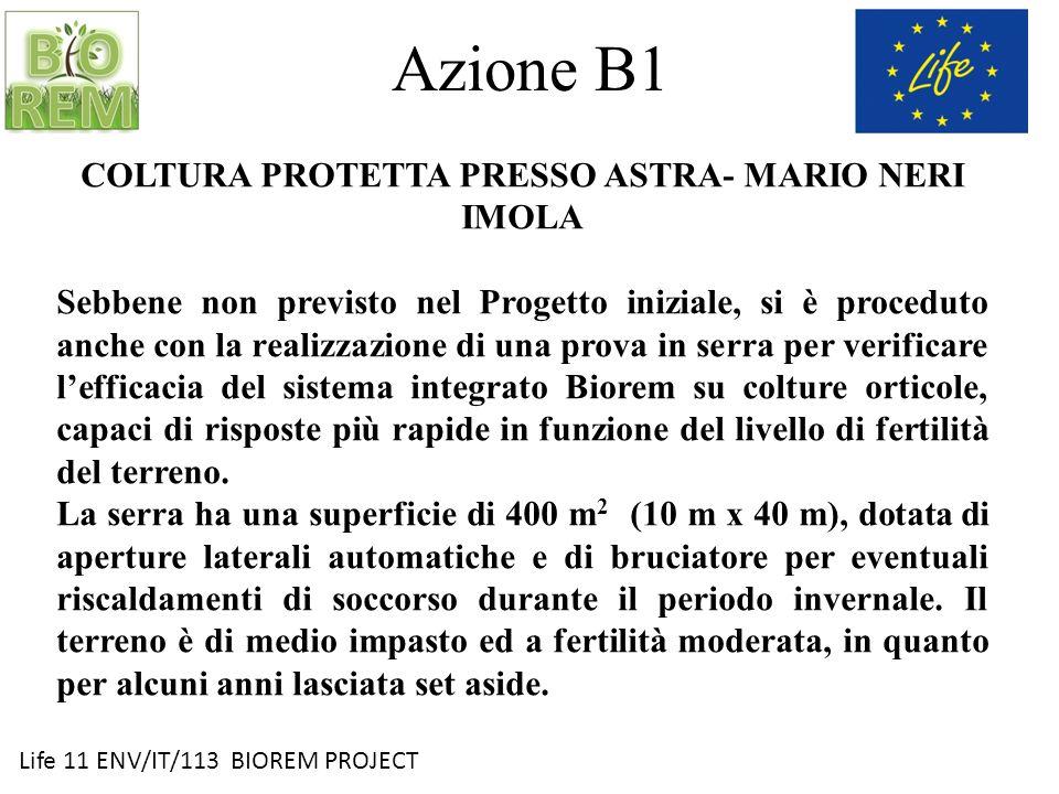 Life 11 ENV/IT/113 BIOREM PROJECT Azione B1 COLTURA PROTETTA PRESSO ASTRA- MARIO NERI IMOLA Sebbene non previsto nel Progetto iniziale, si è proceduto