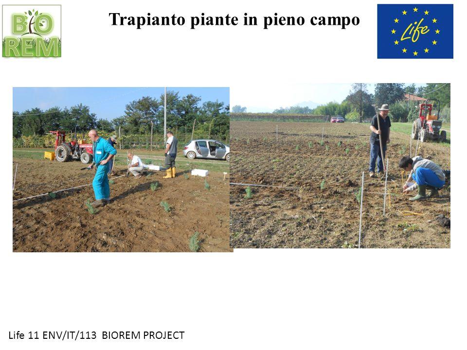 Life 11 ENV/IT/113 BIOREM PROJECT Trapianto piante in pieno campo