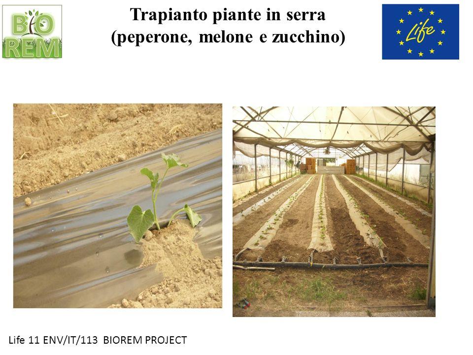 Life 11 ENV/IT/113 BIOREM PROJECT Trapianto piante in serra (peperone, melone e zucchino)