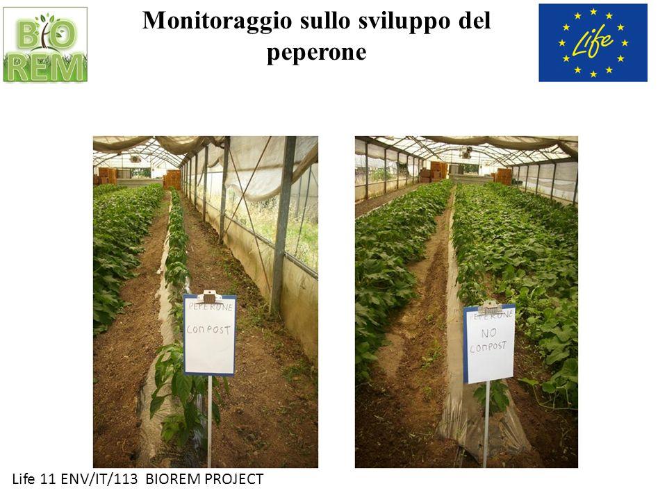 Life 11 ENV/IT/113 BIOREM PROJECT Monitoraggio sullo sviluppo del peperone