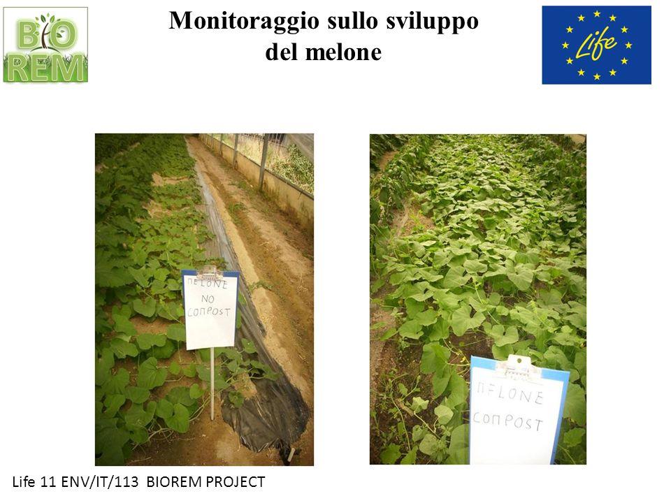 Life 11 ENV/IT/113 BIOREM PROJECT Monitoraggio sullo sviluppo dello zucchino