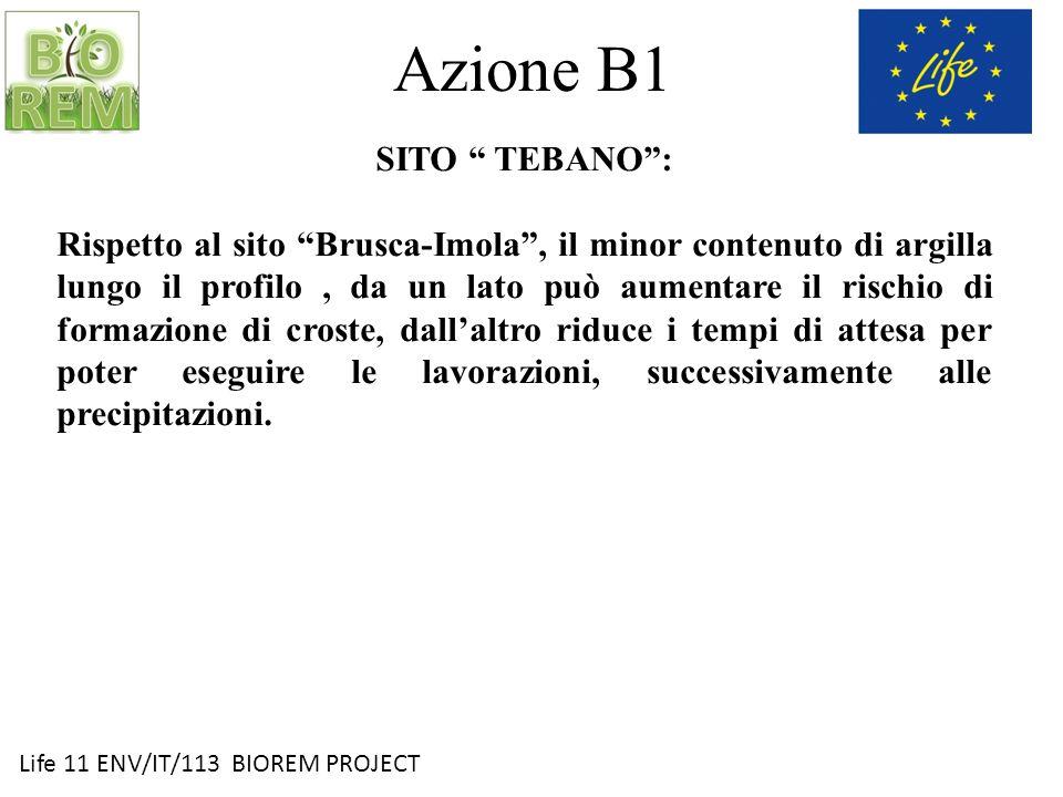 Life 11 ENV/IT/113 BIOREM PROJECT Azione B1 SITO TEBANO: Rispetto al sito Brusca-Imola, il minor contenuto di argilla lungo il profilo, da un lato può