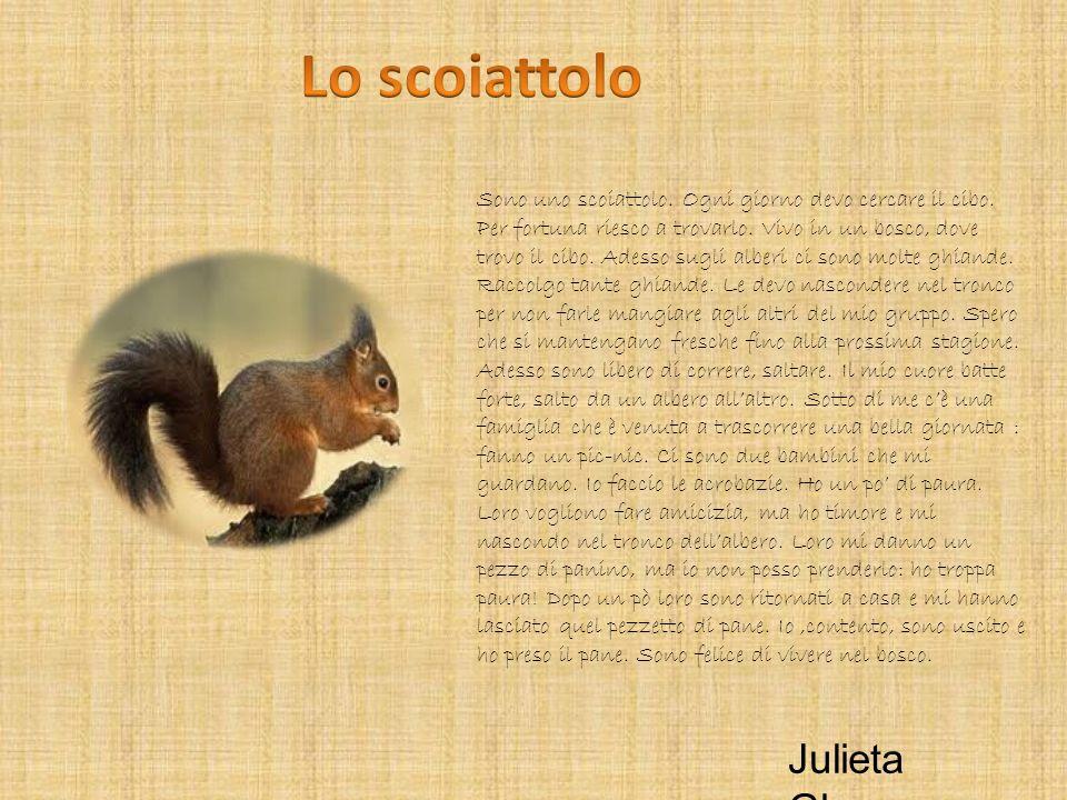 Sono uno scoiattolo. Ogni giorno devo cercare il cibo. Per fortuna riesco a trovarlo. Vivo in un bosco, dove trovo il cibo. Adesso sugli alberi ci son