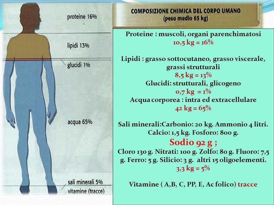 Proteine : muscoli, organi parenchimatosi 10,5 kg = 16% Lipidi : grasso sottocutaneo, grasso viscerale, grassi strutturali 8,5 kg = 13% Glucidi: strut