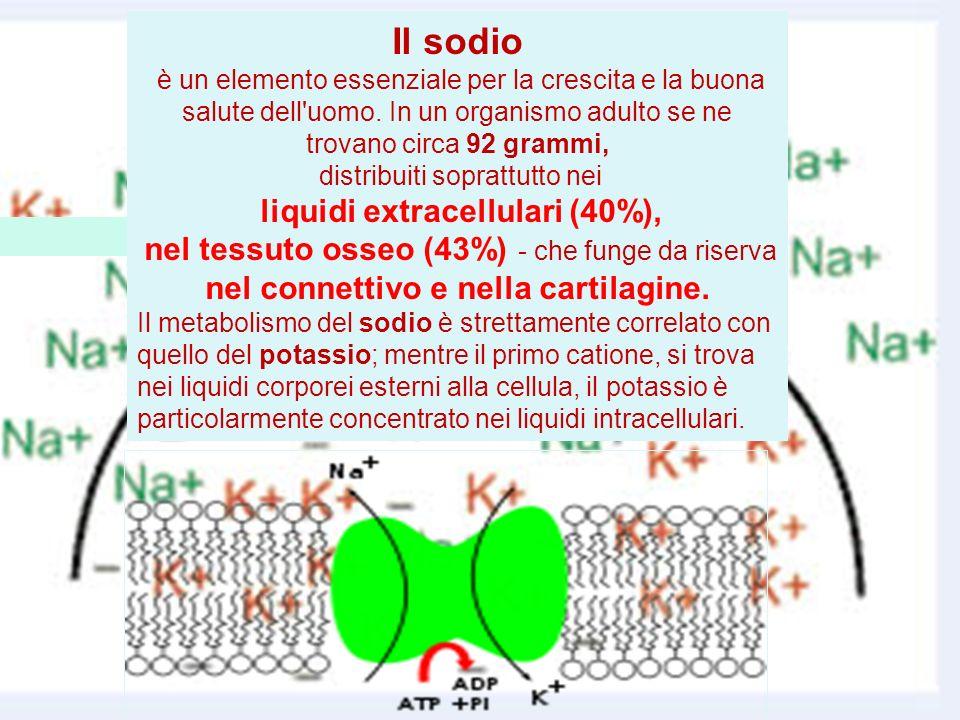 Il sodio è un elemento essenziale per la crescita e la buona salute dell'uomo. In un organismo adulto se ne trovano circa 92 grammi, distribuiti sopra