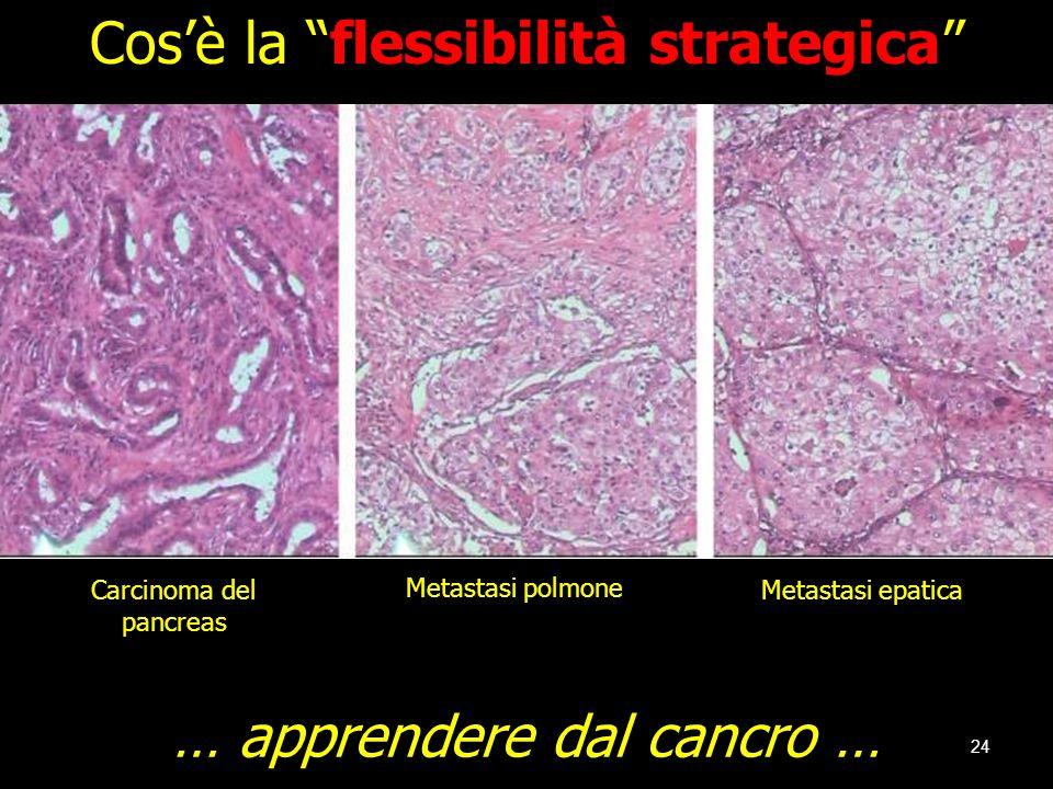 24 Carcinoma del pancreas Metastasi epatica Metastasi polmone Cosè la flessibilità strategica … apprendere dal cancro …