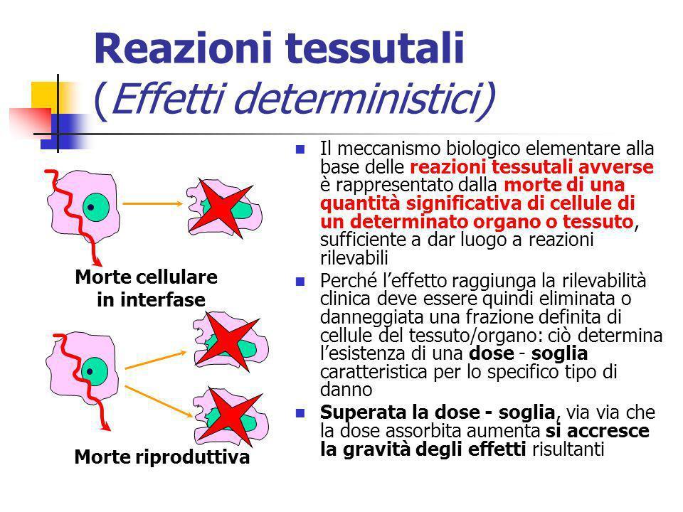 Reazioni tessutali (Effetti deterministici) Il meccanismo biologico elementare alla base delle reazioni tessutali avverse è rappresentato dalla morte