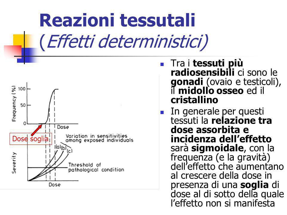 Reazioni tessutali (Effetti deterministici) Tra i tessuti più radiosensibili ci sono le gonadi (ovaio e testicoli), il midollo osseo ed il cristallino