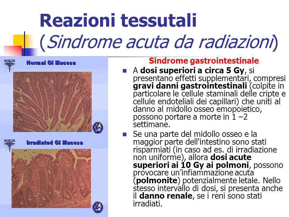 Reazioni tessutali (Sindrome acuta da radiazioni) Sindrome gastrointestinale A dosi superiori a circa 5 Gy, si presentano effetti supplementari, compr