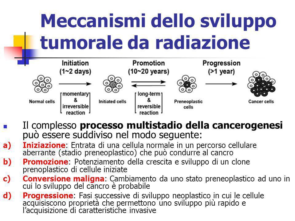 Meccanismi dello sviluppo tumorale da radiazione Il complesso processo multistadio della cancerogenesi può essere suddiviso nel modo seguente: a)Inizi
