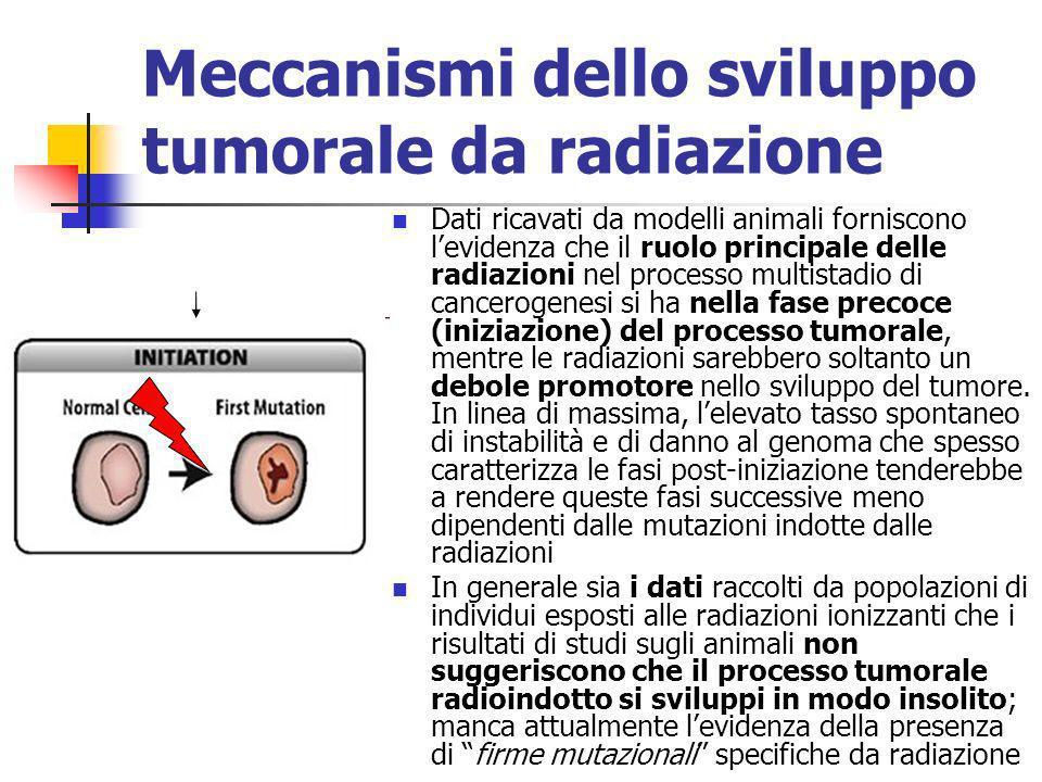 Meccanismi dello sviluppo tumorale da radiazione Dati ricavati da modelli animali forniscono levidenza che il ruolo principale delle radiazioni nel pr