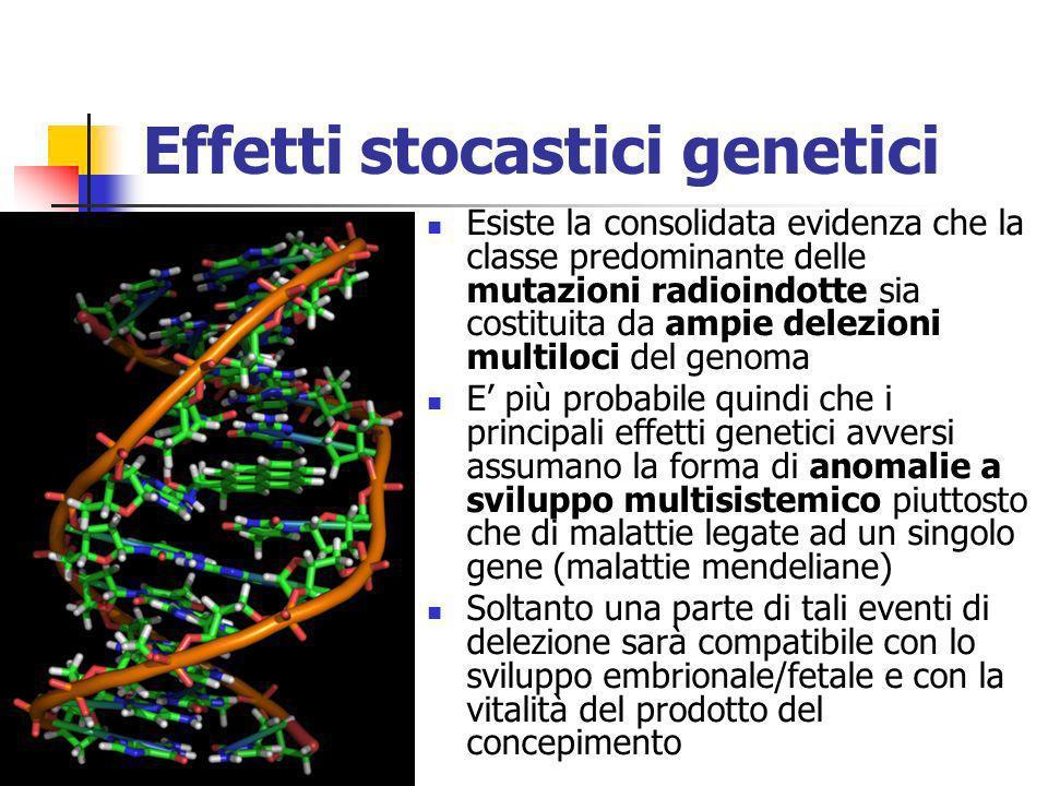 Effetti stocastici genetici Esiste la consolidata evidenza che la classe predominante delle mutazioni radioindotte sia costituita da ampie delezioni m