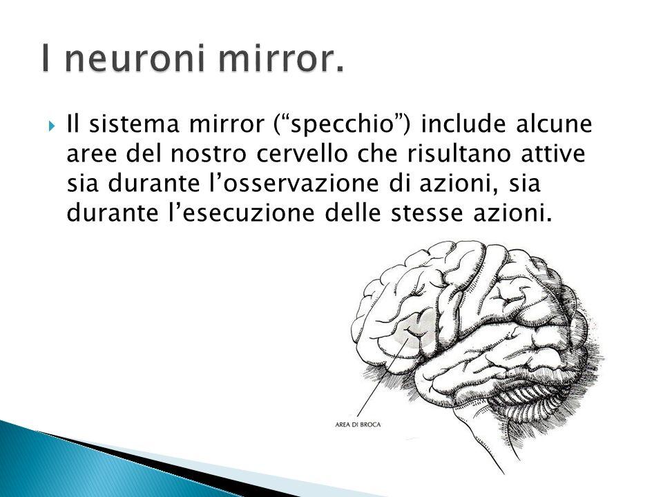Il sistema mirror (specchio) include alcune aree del nostro cervello che risultano attive sia durante losservazione di azioni, sia durante lesecuzione
