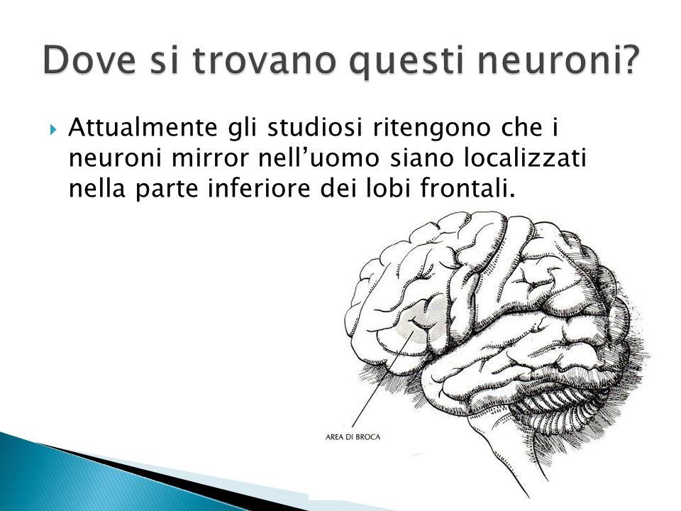 Attualmente gli studiosi ritengono che i neuroni mirror nelluomo siano localizzati nella parte inferiore dei lobi frontali.