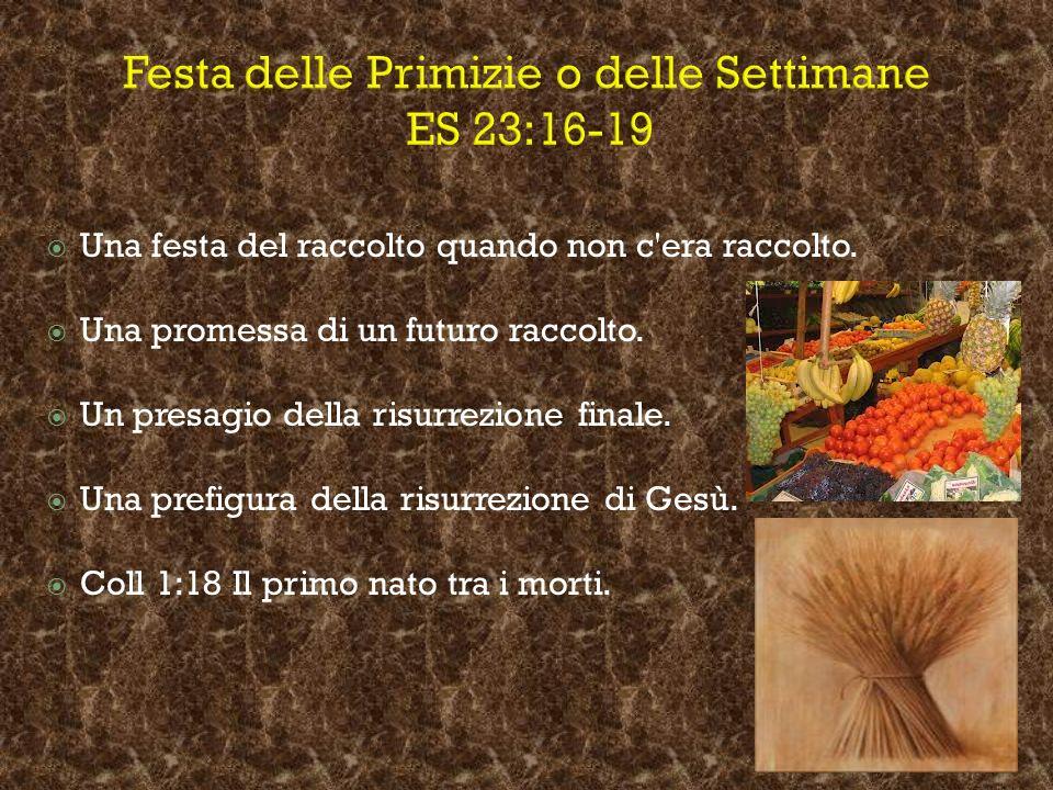 Festa delle Primizie o delle Settimane ES 23:16-19 Una festa del raccolto quando non c'era raccolto. Una promessa di un futuro raccolto. Un presagio d