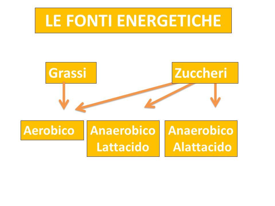 LE FONTI ENERGETICHE AerobicoAnaerobico Lattacido Anaerobico Alattacido Grassi Zuccheri