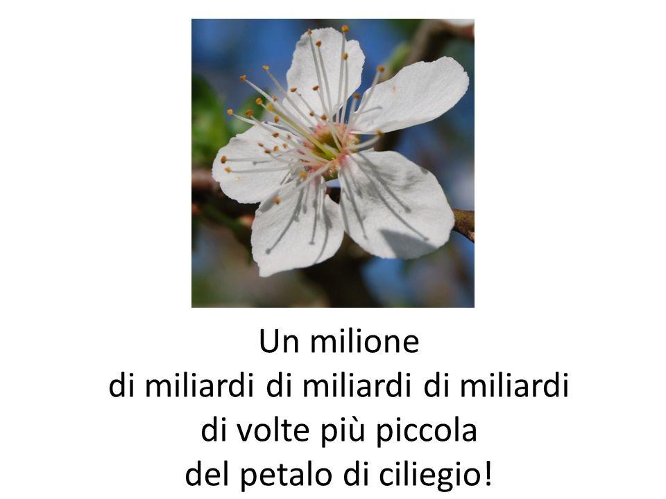 Un milione di miliardi di miliardi di miliardi di volte più piccola del petalo di ciliegio!