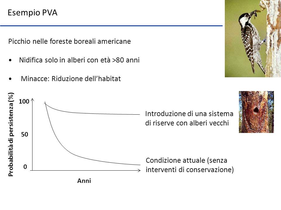 Picchio nelle foreste boreali americane Nidifica solo in alberi con età >80 anni Minacce: Riduzione dellhabitat Anni Probabilità di persistenza (%) Co