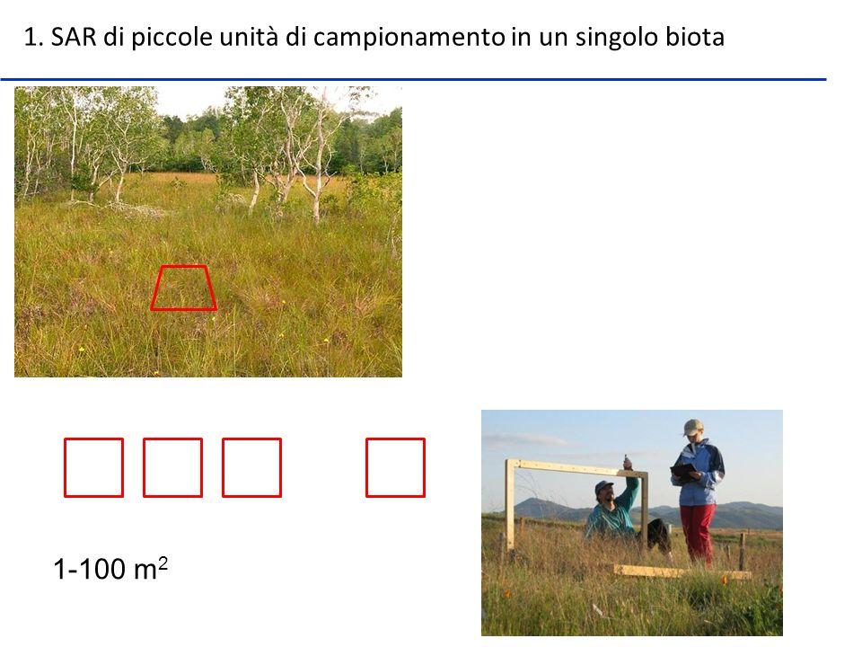 1. SAR di piccole unità di campionamento in un singolo biota 1-100 m 2