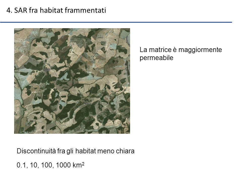 Discontinuità fra gli habitat meno chiara 4. SAR fra habitat frammentati 0.1, 10, 100, 1000 km 2 La matrice è maggiormente permeabile