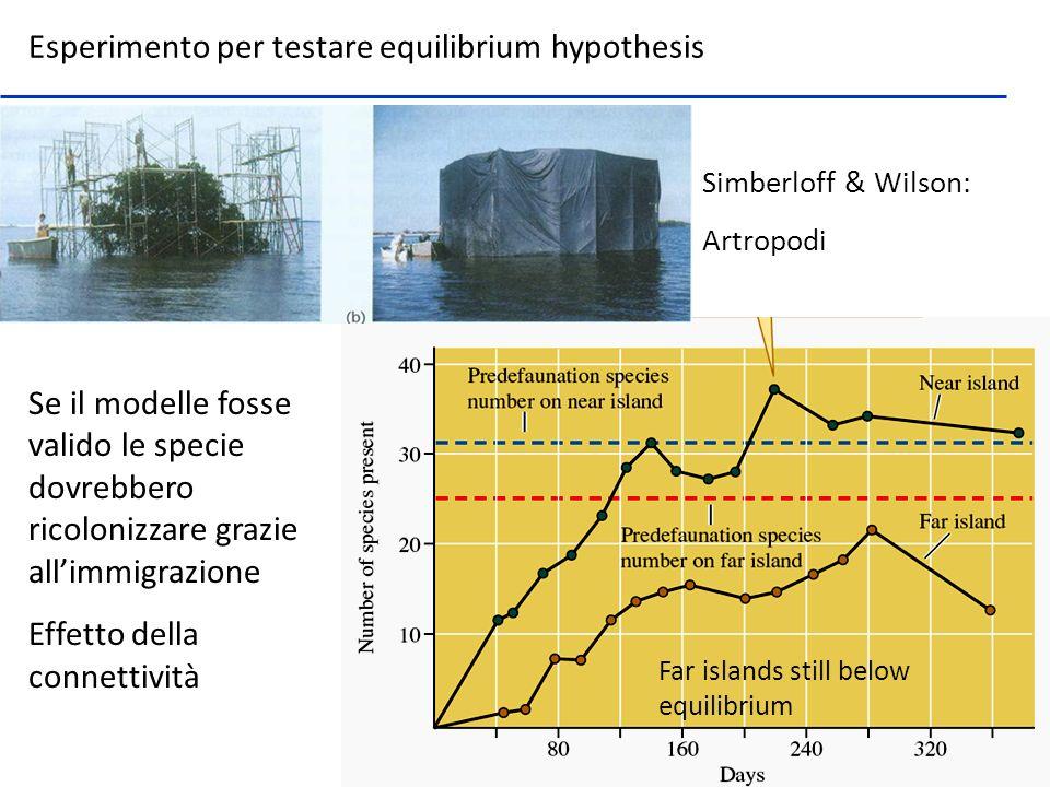 Simberloff & Wilson: Artropodi Se il modelle fosse valido le specie dovrebbero ricolonizzare grazie allimmigrazione Effetto della connettività Far isl