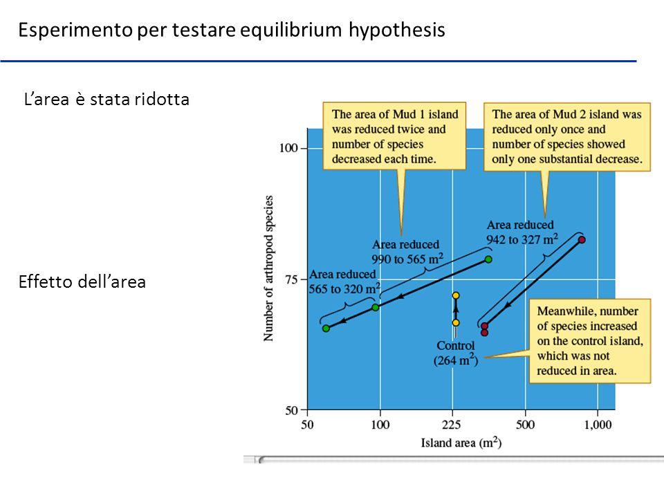 Effetto dellarea Larea è stata ridotta Esperimento per testare equilibrium hypothesis