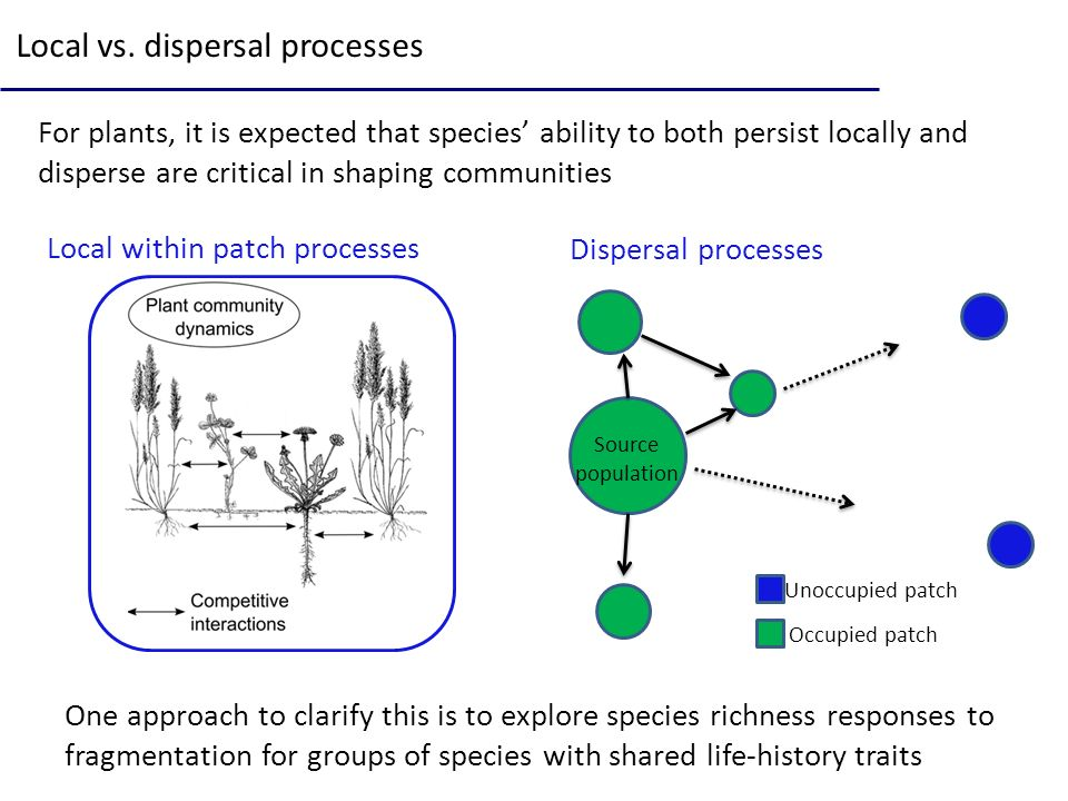 Local vs. dispersal processes For plants, it is expected that species ability to both persist locally and disperse are critical in shaping communities