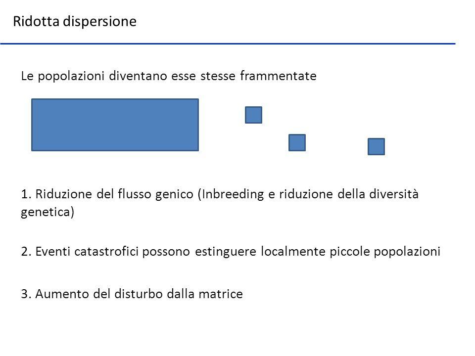 Le popolazioni diventano esse stesse frammentate Ridotta dispersione 1. Riduzione del flusso genico (Inbreeding e riduzione della diversità genetica)